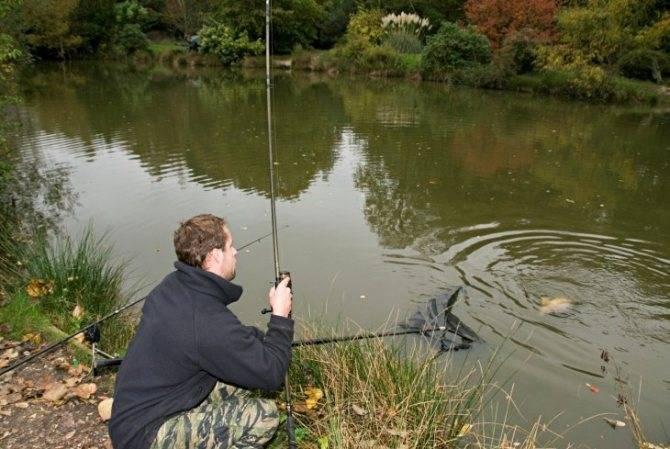 Ловля толстолобика: как ловить, на что клюет рыба, способы поймать на удочку, приманки