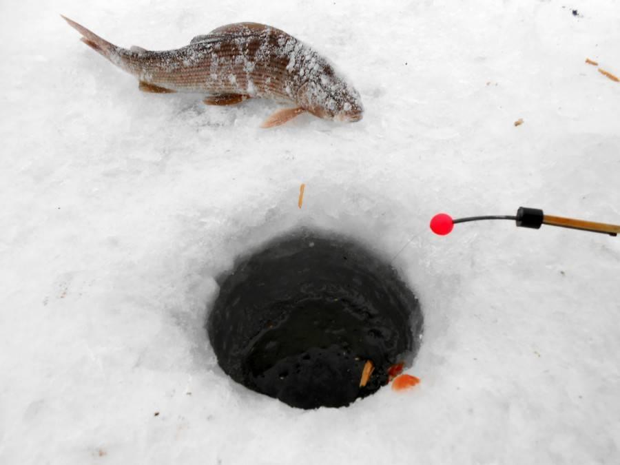 Ловля плотвы зимой – тактика, техника и снасти