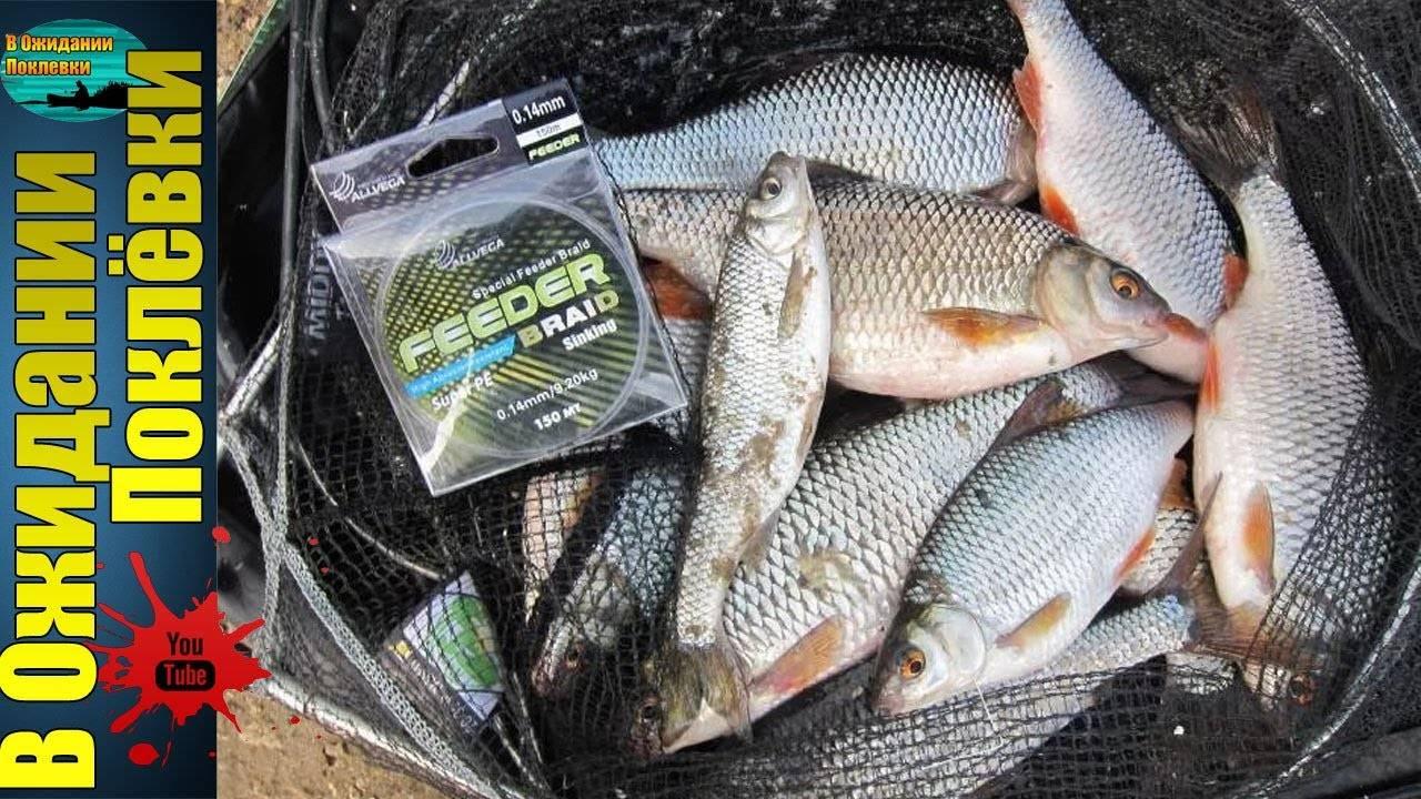 Ловля плотвы осенью на поплавок и другие рыболовные снасти