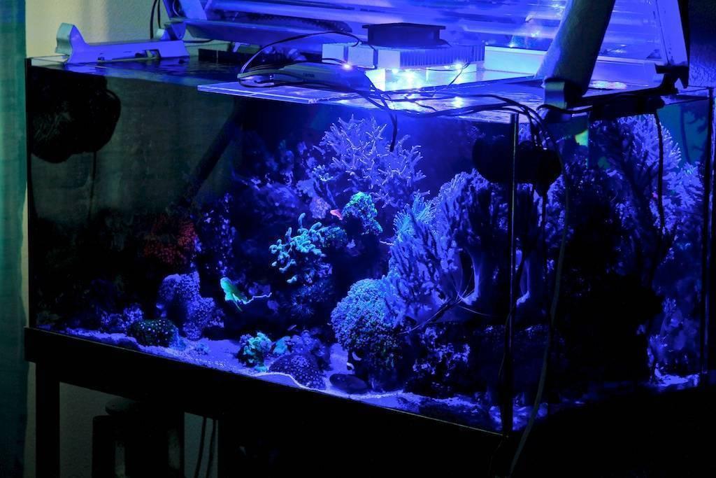 Оборудование для аквариума что нужно для запуска и ухода