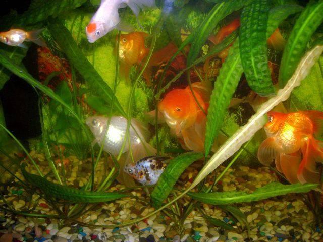 Память у рыб: сколько секунд помнит рыбка информацию