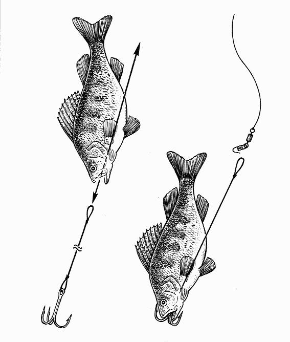 Ловля живца