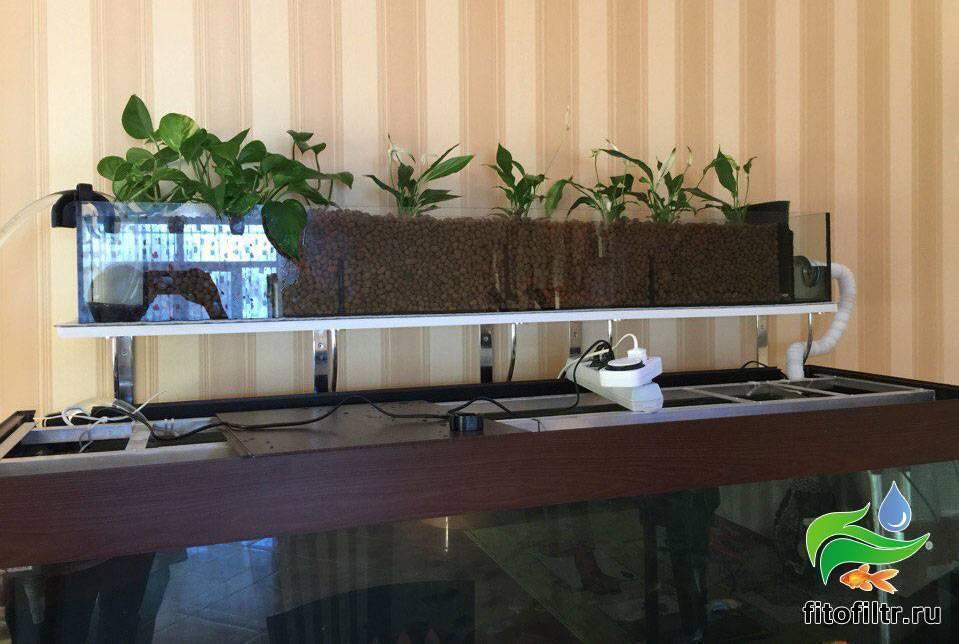 Фитофильтр для аквариума своими руками в травнике и растения