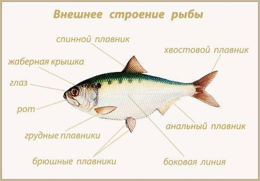 Рыбы, питающиеся рыбой. Чем и как питаются рыбы в море?