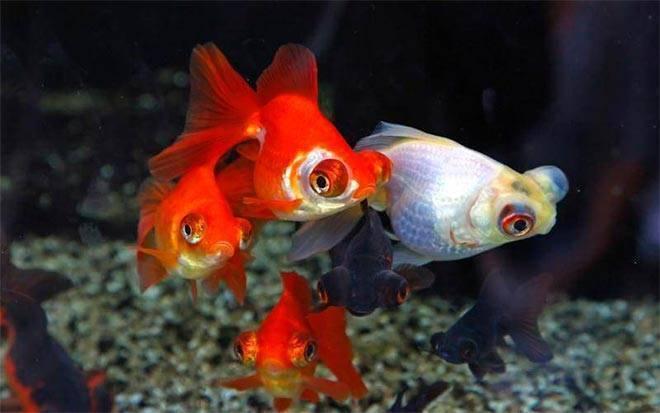 Телескоп рыбка
