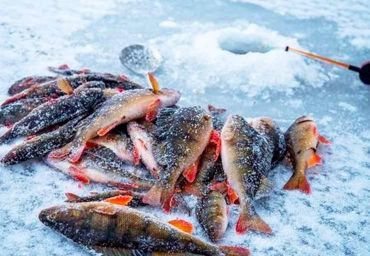 Ловля щуки зимой по первому льду, в глухозимье и по последнему льду