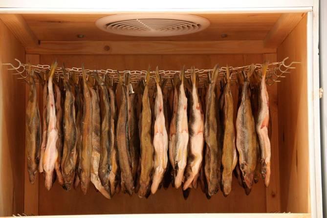 Как сушить рыбу в домашних условиях летом,зимой и осенью