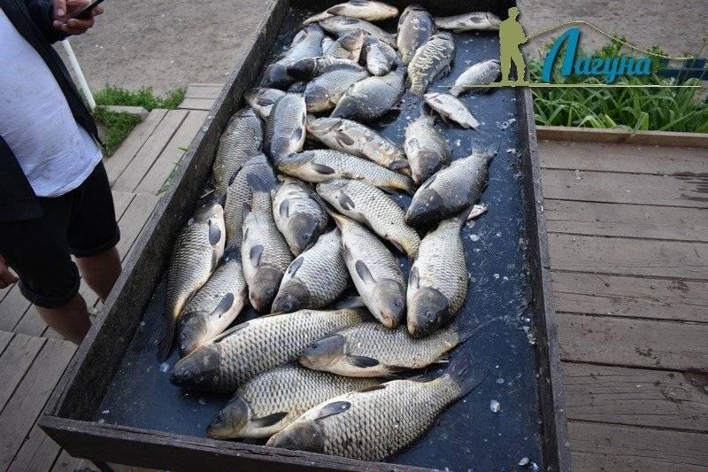 Рыбалка в раменском районе (г.о.). рыболовный форум и отчеты