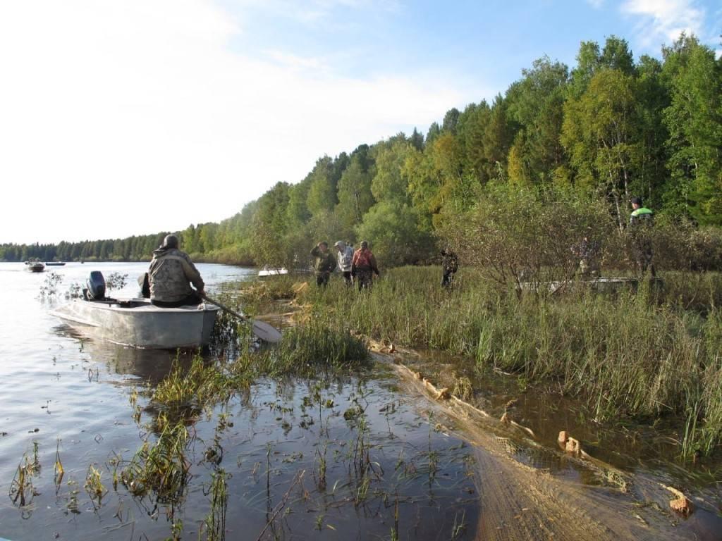 Рыбалка в ханты-мансийске: клев рыбы в хмао, ловля в каменном, в урае и радужном, места для рыбалки на реках обь и конда