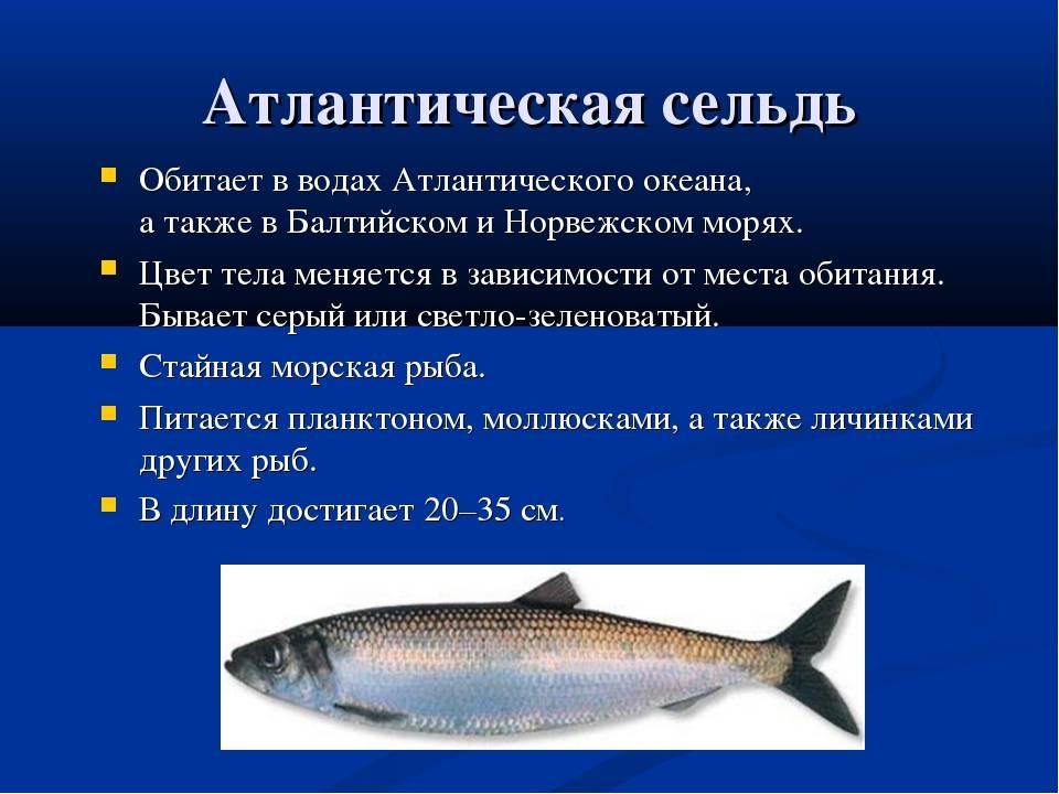 Рыба горбуша - морская или речная, где обитает
