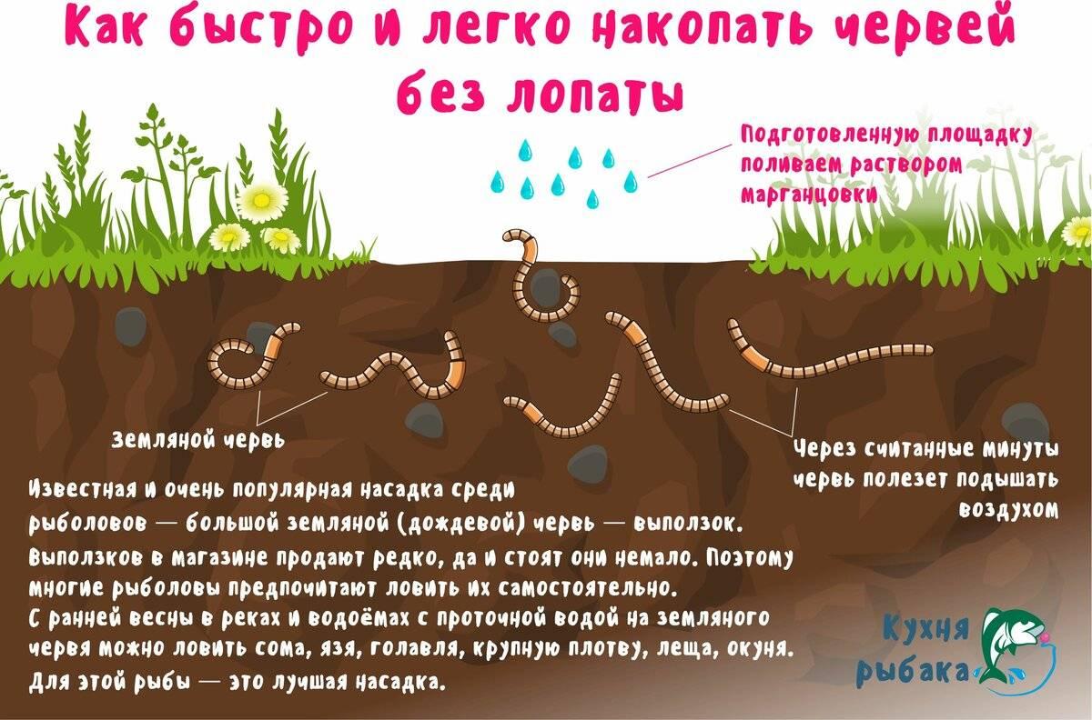 Где найти червей их среда обитания и добыча, правильное хранение.