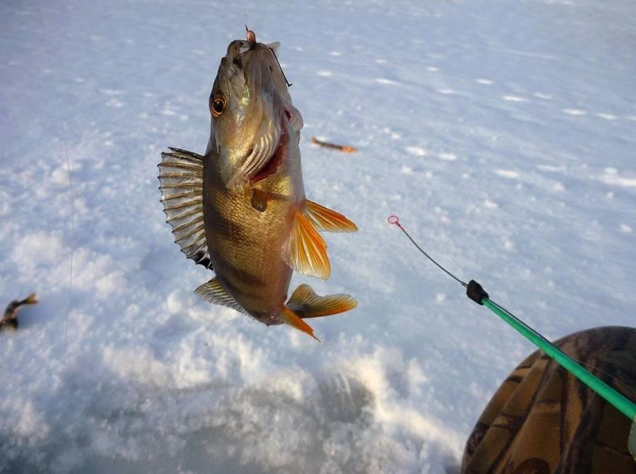 Рыбалка в глухозимье - где и какую рыбу ловить?