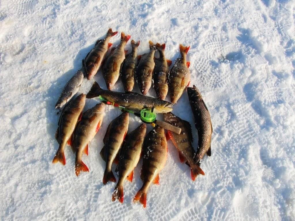 Платная рыбалка и рыболовные туры карелии