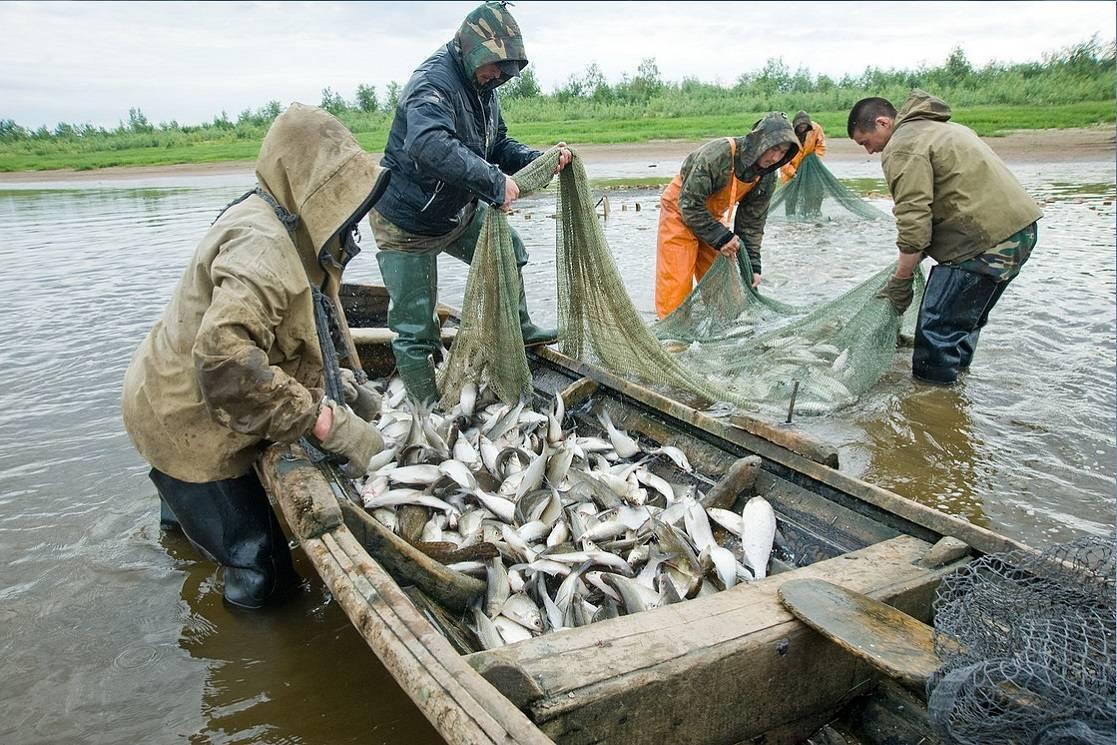 Рыбалка в ханты-мансийском автономном округе - читайте на сatcher.fish