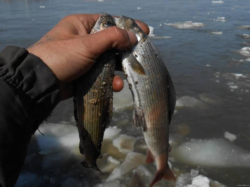 Рыбалка в кемерово и кемеровской области: в береговом и панфилово, в коновалово и малых реках. где еще ловить рыбу в кемеровском районе?