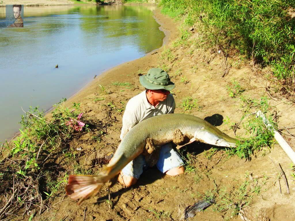 Щука-аллигатор — плод странной любви и мечта рыбаков — 4 лапки