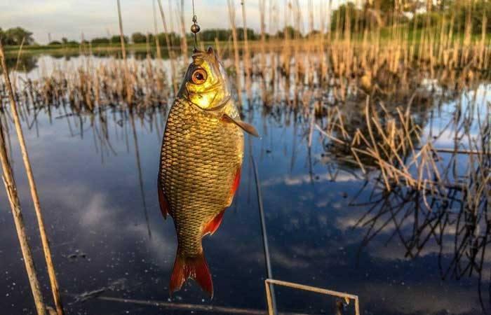 Ловля красноперки - охота и рыбалка, животные, туризм