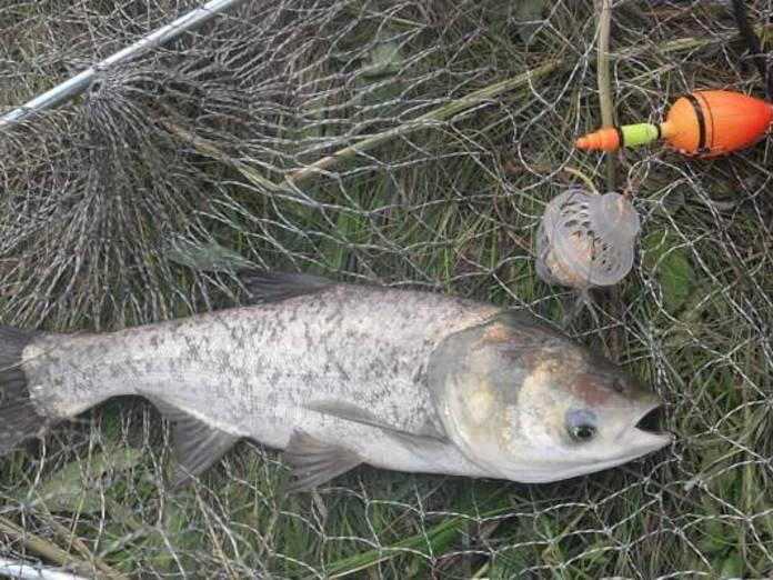 Тактика ловли плотвы на поплавочные снасти – рыбалке.нет