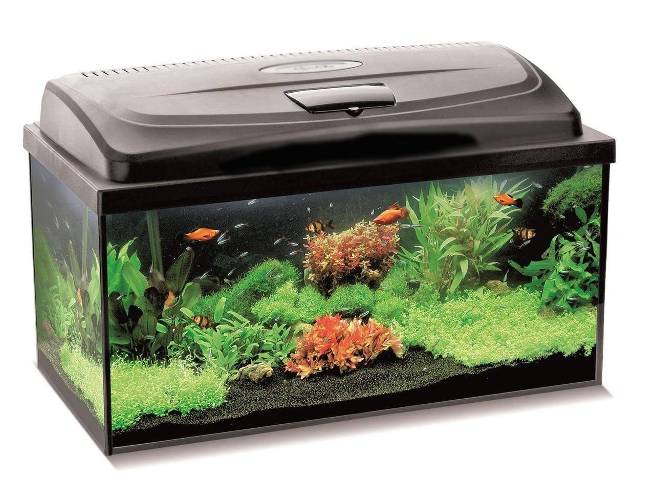 Важный вопрос: какой грунт лучше выбрать для аквариума?