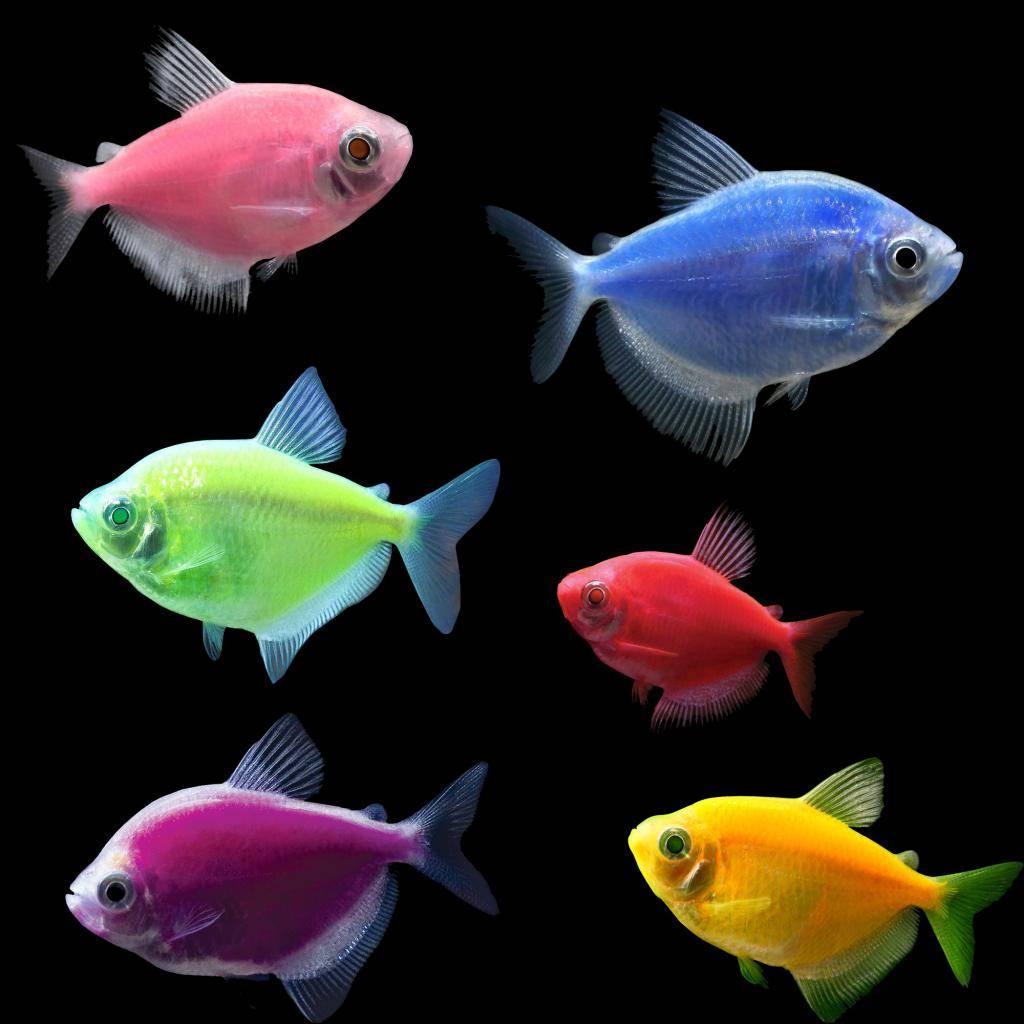 Таблица совместимость аквариумных рыбок в одном аквариуме: для каждой рыбки, принцип совместимости, ошибки, как заселить малосовместимые виды