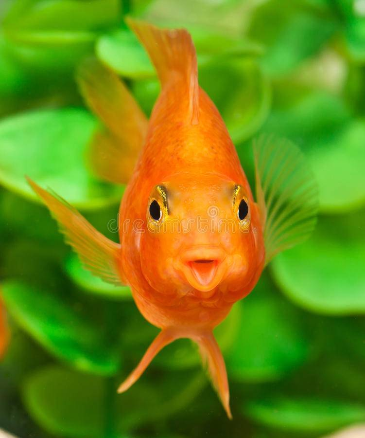 Память как у рыбки 3 секунды: сколько помнит рыба?