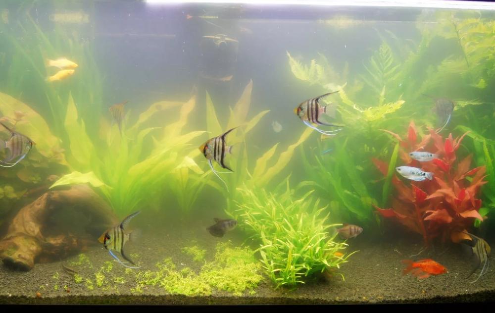 Проблемы с водой в аквариуме: почему желтеет, белеет и меняет цвет?