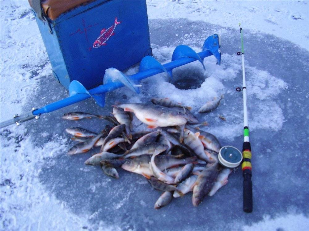 Рыбалка в карелии: куда поехать дикарем, базы и цены