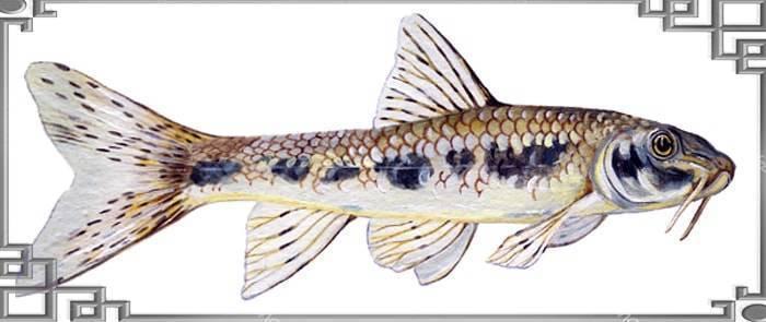 Ловля пескаря: где обитает рыба и какие приманки использовать