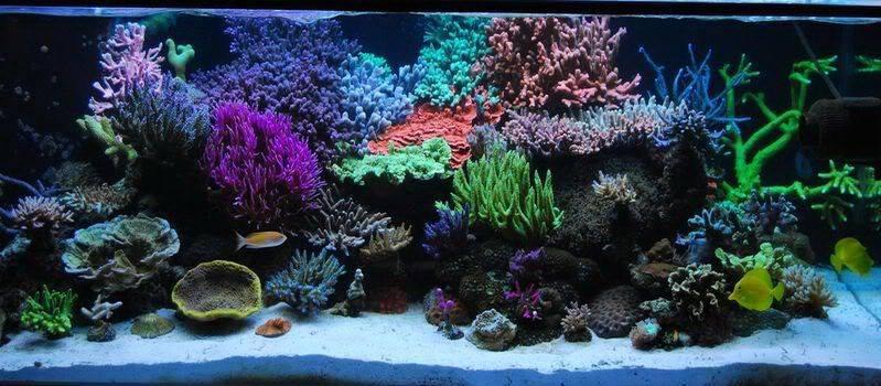 Морской аквариум: с чего начать, оборудование и кого заселить