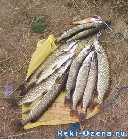 Рыбалка в свердловской области. форум и отчеты рыбаков