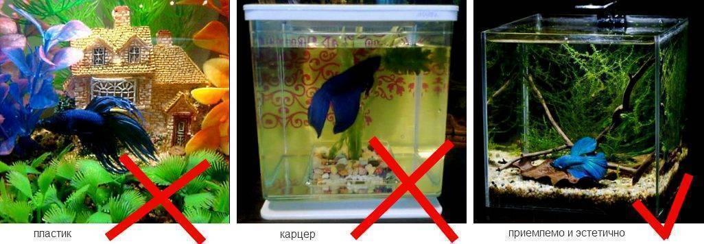 Запуск аквариума: пошаговая инструкция с нуля для начинающего аквариумиста