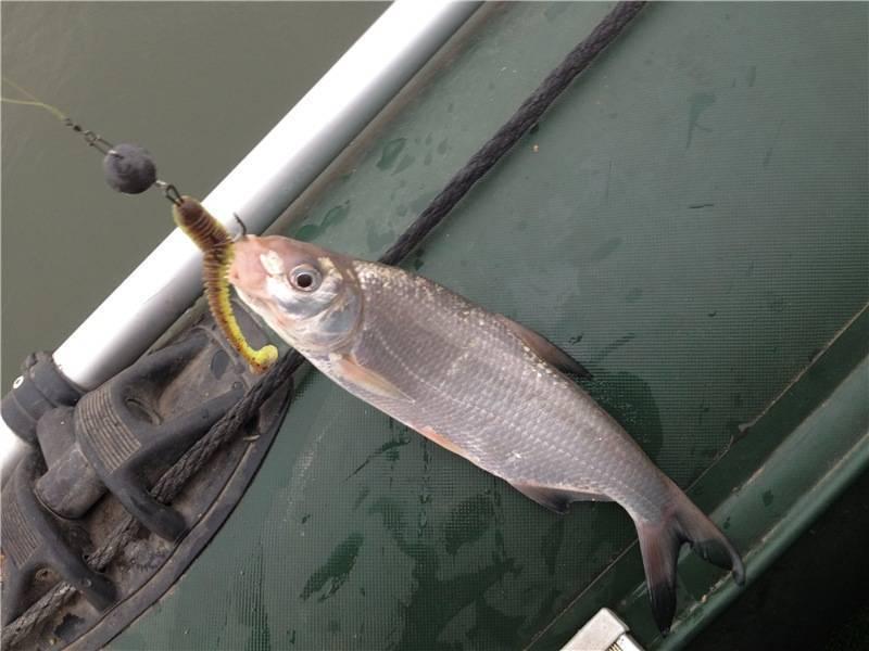 Прикормка для рыбца на дону — ловись рыбка