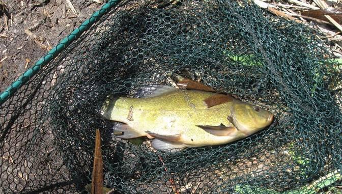 Ловля линя: рыбалка осенью и летом в августе на поплавочную удочку