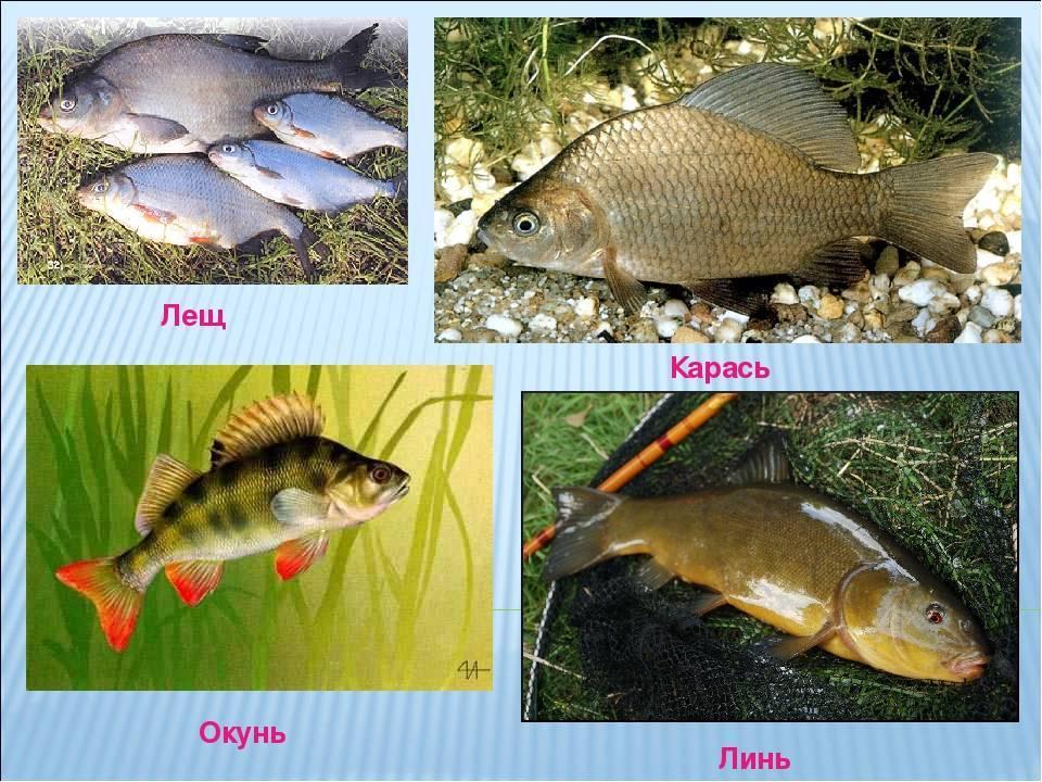 Рыбалка в июле: на что ловить и где искать рыбу