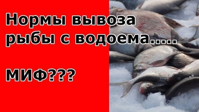 На что можно ловить рыбу по правилам рыболовства: нормы вылова, разрешенные снасти и места рыбалки