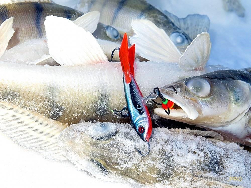 Ловля окуня на балансир зимой: раскрываем секреты - читайте на сatcher.fish