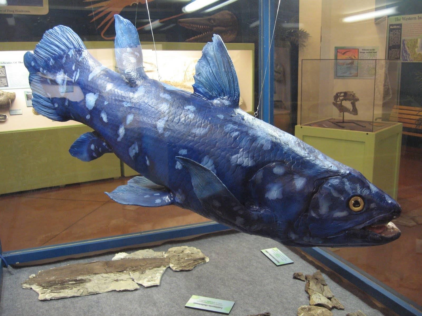 Кистепёрая рыба латимерия