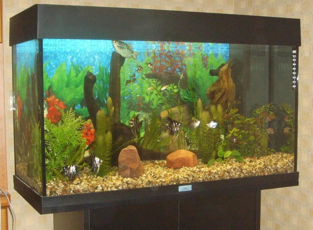 Как выбрать аквариум: советы специалистов для новичков