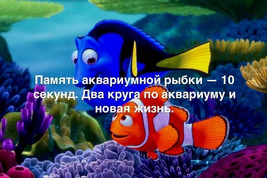 Какая память у рыб – особенности сохранения информации