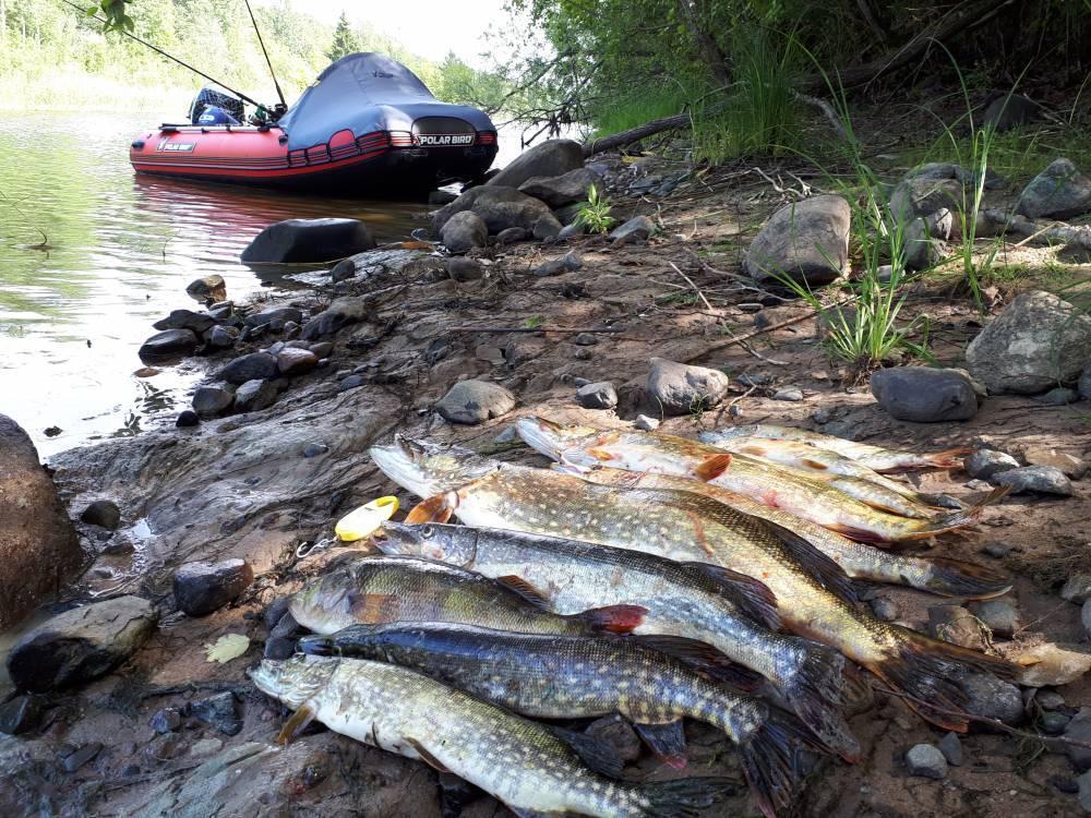 Отчет о рыбалке в ладожских шхерах