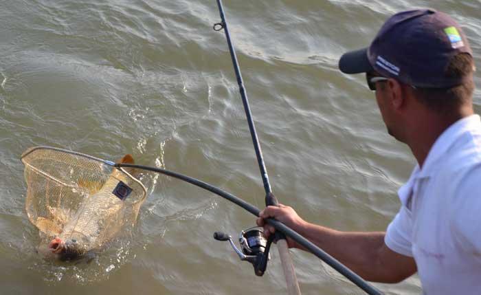 Рыбалка на Десне: особенности, интересные факты и отзывы