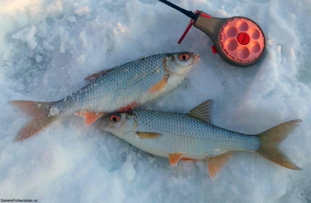 Рыбалка в глухозимье, когда наступает глухозимье и как рыбачить