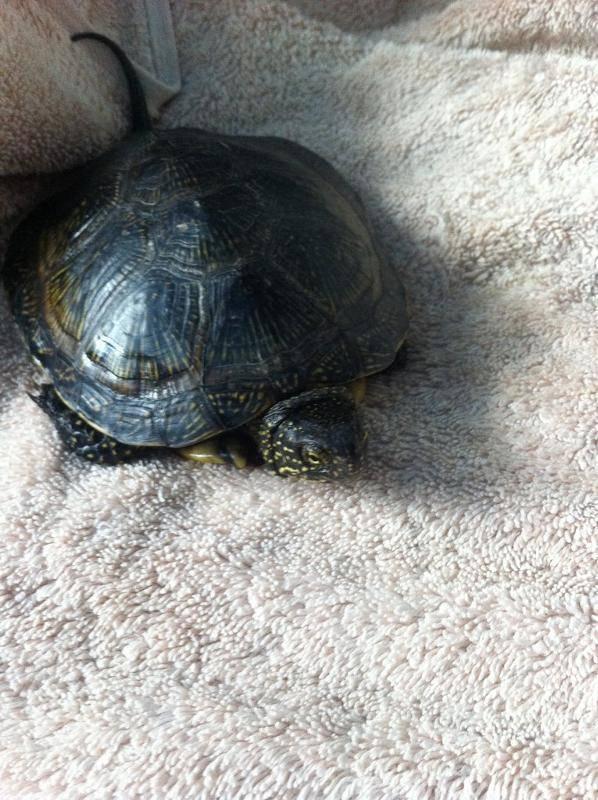 Сколько лет живут черепахи