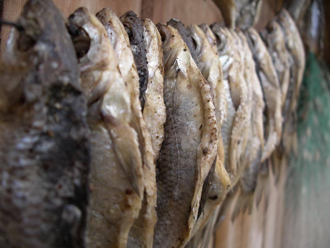 Вяленый карась: как засолить для сушки в домашних условиях, рецепты засолки
