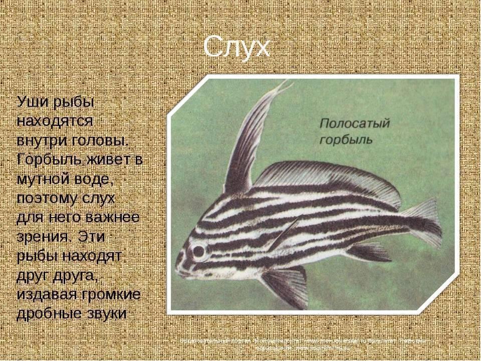 Зрение рыб. что видят рыбы. ум рыб. рефлексы, научение, опыт, сообразительность рыб. места обитания рыб. интересное о рыбах и морских обитателях , аквариумныек рыбки, содержание, разведение, поведение, питание, корм, темпе