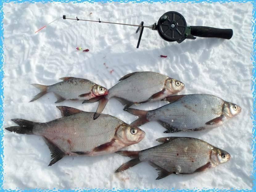 Ловля леща зимой - охота и рыбалка, животные, туризм