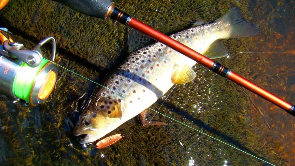 Способы ловли форели: разновидности снастей и приманок - читайте на сatcher.fish