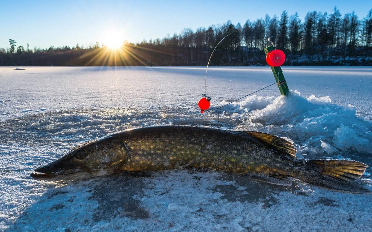 Щука на жерлицы зимой: установка жерлиц, поиск щуки, снасть