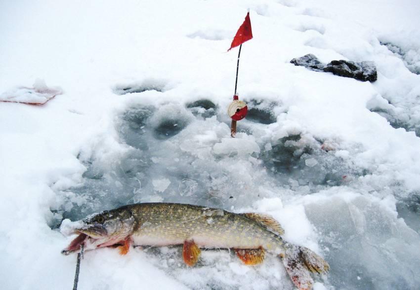 Щука на жерлицы зимой по первому льду | ловля на зимние жерлицы
