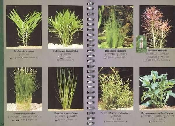 Неприхотливые аквариумные растения: разновидности, выбор и уход